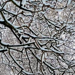 Wintertakken in structuur