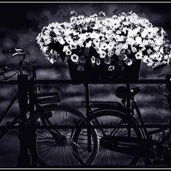Fietsen en bloemen