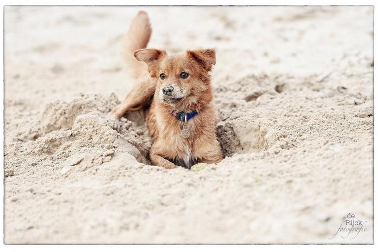 Spelen in het zand -