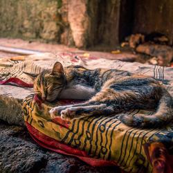 Kat in Mumbai