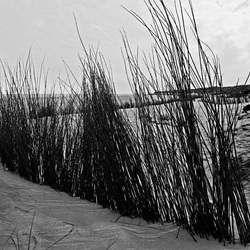 Texels strandzicht