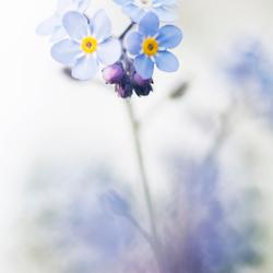 Zachtblauw