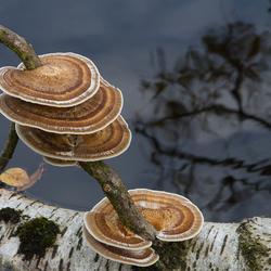 paddenstoelentijd