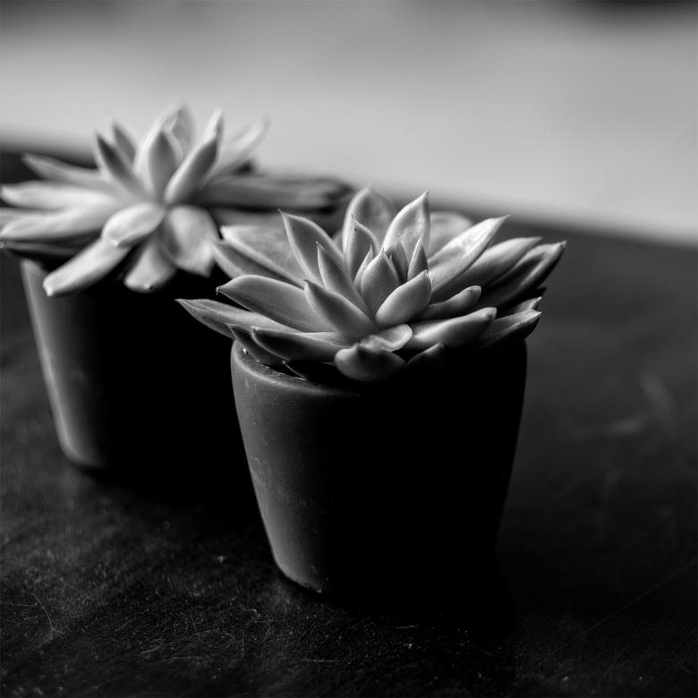 een heel vet plantje