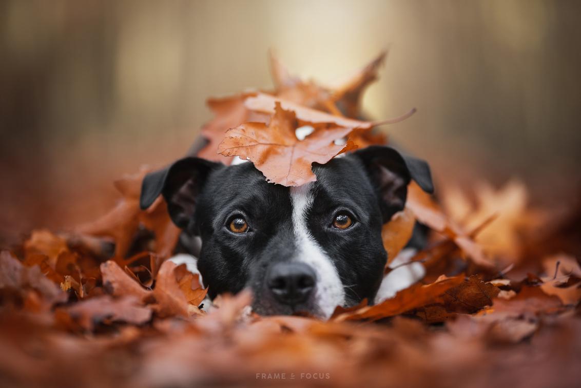 A Pile Of Autumn Cuteness