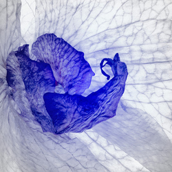 Orchidee-Abstract-02