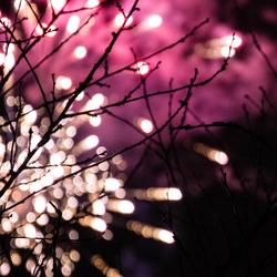 vuurwerk door de bomen