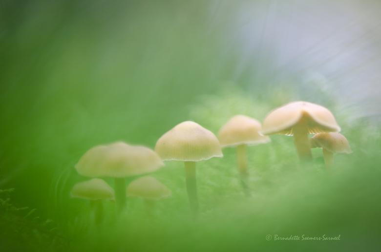 Groepsfoto - Eindelijk moet ook ik er aan geloven, de herfst is echt begonnen. Er zijn nog heel weinig paddenstoeltjes te vinden. Op een boomstronk tr