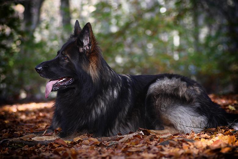 Zoë Autumn Shoot - Beautifull in Autumn