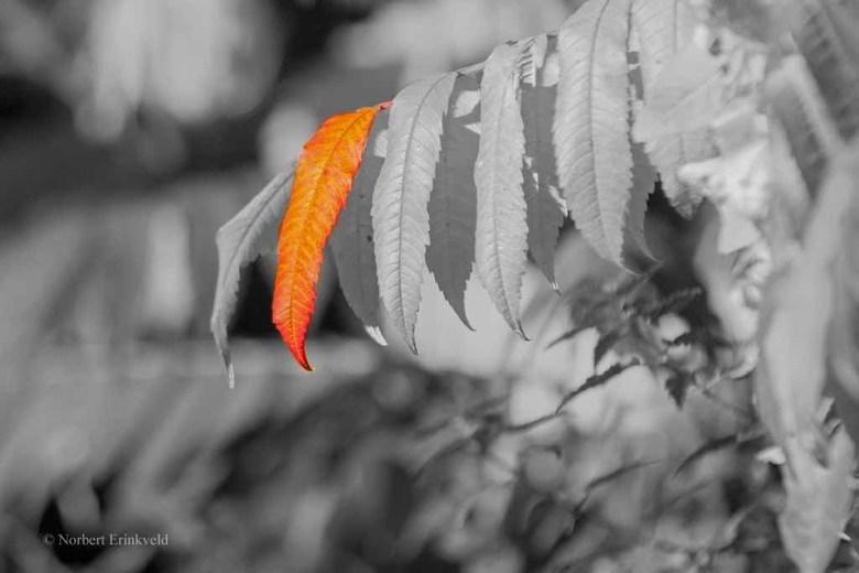 Herfst - Herfst. <br /> De bladeren verkleuren weer. Door slechts 1 blad in kleur te laten zien, komt de verkleuring beter tot zijn recht