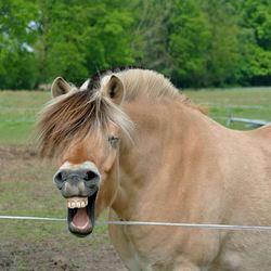 Even lachen!