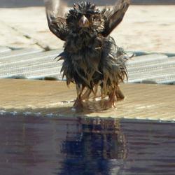musje aan het badderen