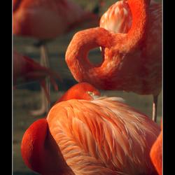 Oranje boven (2).....
