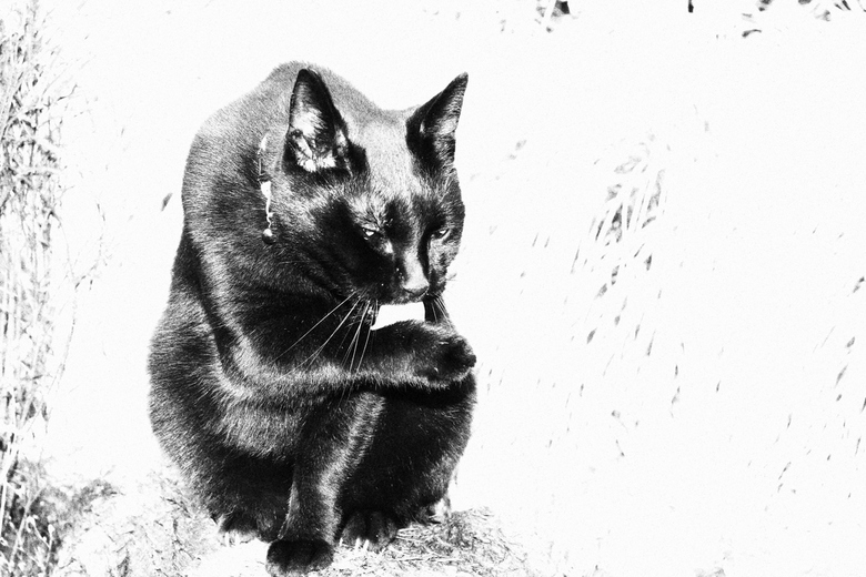 Black Cat - Ik vind dit persoonlijk een mooie foto hoe mijn kat zich zit te wassen. Was lastig kiezen welke het mooiste contrast zou geven.