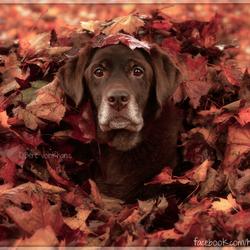 50 shades of Autumn #part2