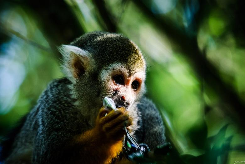 aapje uit de zoo - Een aapje uit de zoo van Paradaiza