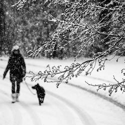 Wandelen met de hond......