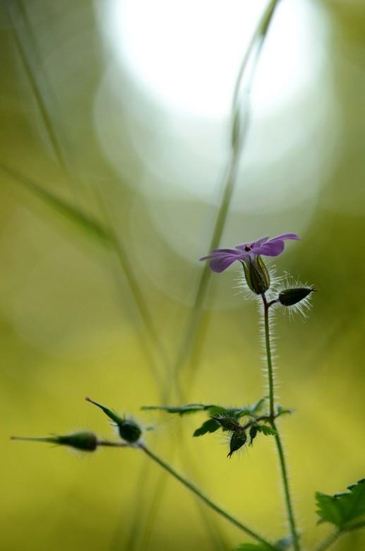 """Forest flower... - Per ongeluk gewist, nu dus weer ge-uploaded <img  src=""""/images/smileys/wilt.png""""/><br /> Had dus geoefend in het bos..."""