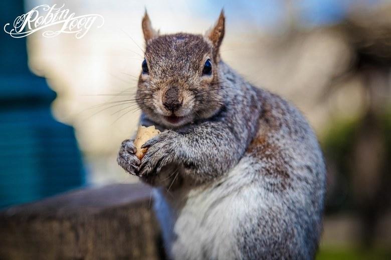 Dinner is served - Leuk hoor die nieuwsgierige eekhoorns.