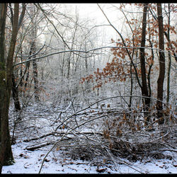 Winter in het bos