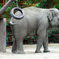 Blijdorp Zoo Rotterdam 3D