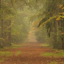 Een mistige ochtend in het Noordbargerbos