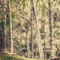 Palmbomen