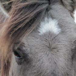 Wilde paarden (2)