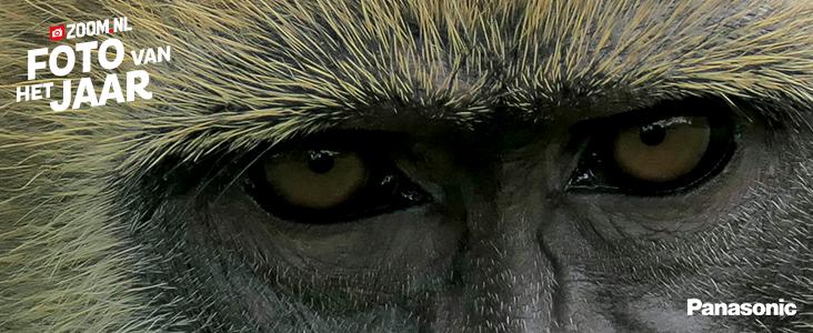 fotowedstrijd: Foto van het jaar: Dieren