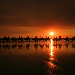 Camelride at sunset