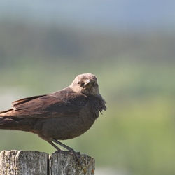 Stoer vogeltje