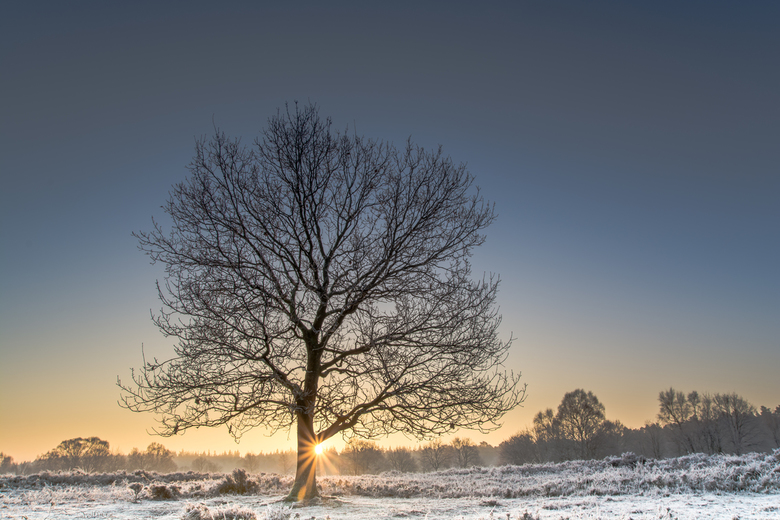 Koude wintermorgen op de heide