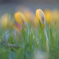 Toch al een beetje lente