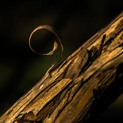 Wondertje van de natuur.