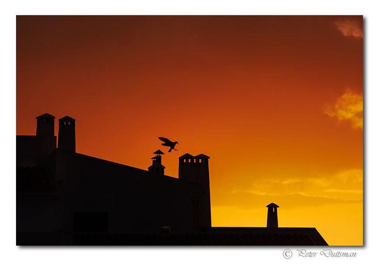 Landing at sunset  - ..