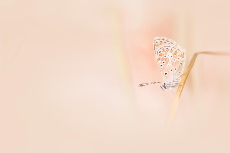 Zacht - Eindeloos speuren en dan gelukkig toch nog een vlindertje vinden.