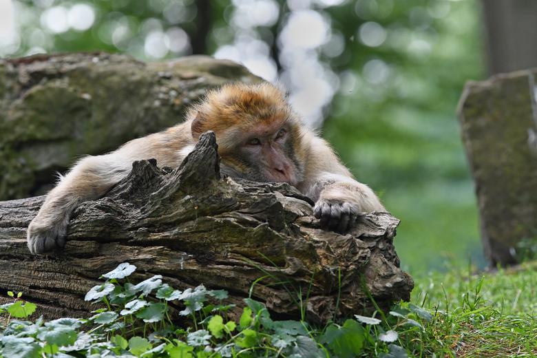 pffft  - Een dag lang dierentuin-bezoekers vermaken en bestelen is best vermoeiend.<br /> <br /> Bedankt voor alle reacties, stemmen en favo&#039;s
