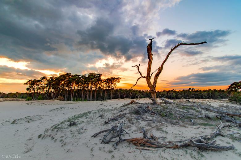 "Wekeromse Zand - ""Gewoon Nederland"", het Wekeromse Zand. Klein stuifzandgebied in Gemeente Ede."