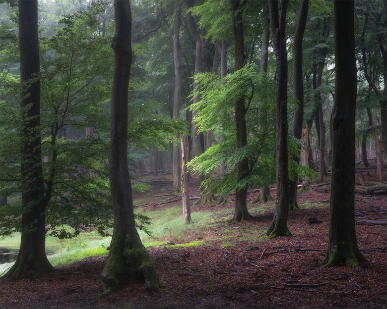 Look for Light - Begin juli gemaakt, toen het ongeveer 3 dagen regende achter elkaar. Het bos is dan de perfecte plek om naar toe te gaan. Altijd wel