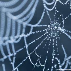 Morning dew web