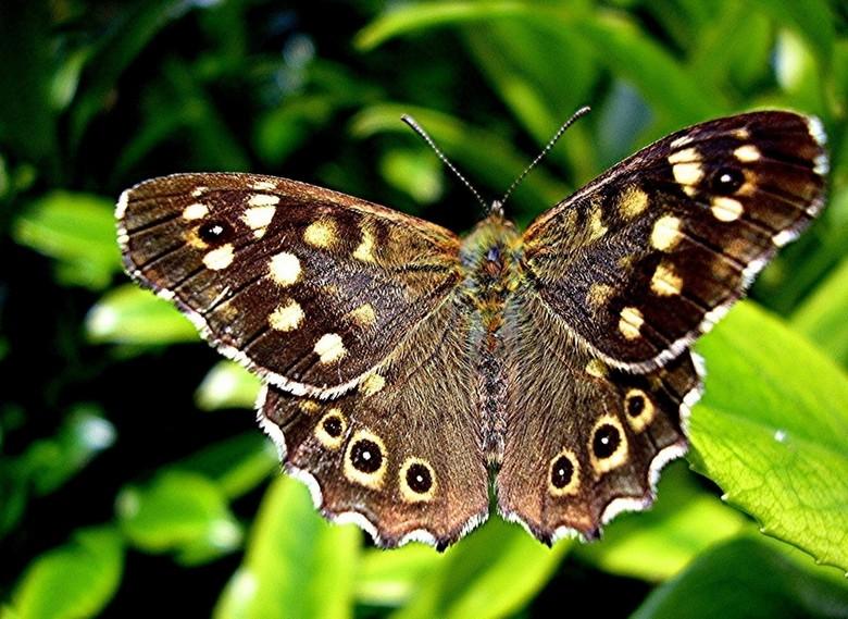 VLINDER - Vlinder in de tuin gefotografeerd,