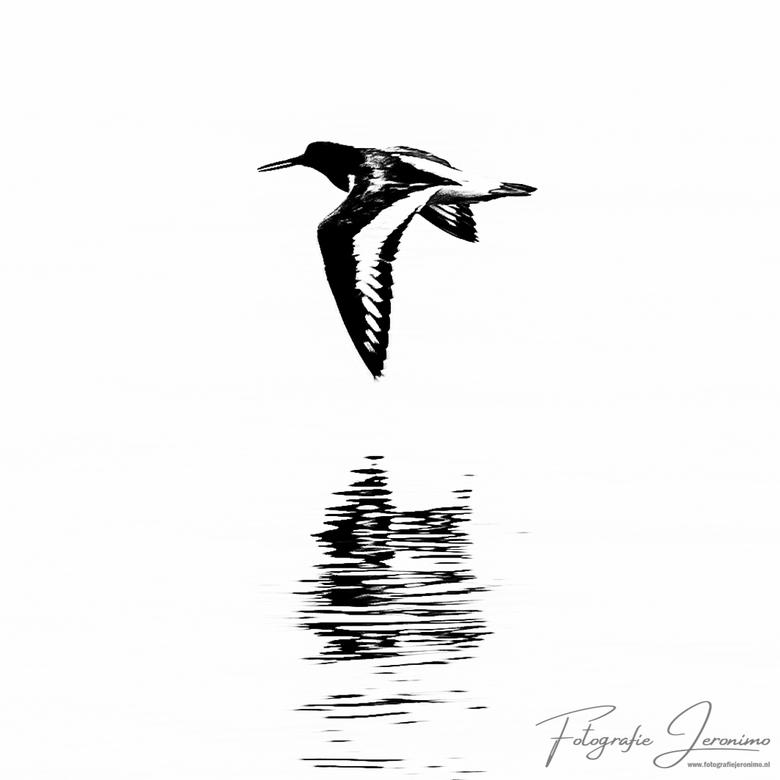 Vliegende scholekster boven het water - Persoonlijk hou ik van minimalistische zwart-wit foto's, en vandaar ook dat ik deze, boven de het water v