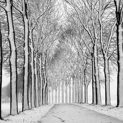 Trees in B/W.......