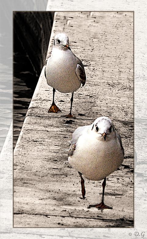 Marching On - De titel spreekt voorzich.<br /> <br /> Sepia gekleurd met uitzondering van de meeuwen. En op de gehele foto een filter toegepast.
