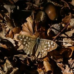 Vlinder mij