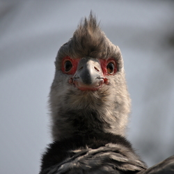 Inwoner van dierenpark Blijdorp