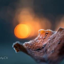 EErste zonlicht gevangen op bevroren blad