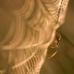 Spider spotlight