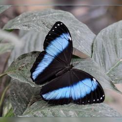 Vlindertuin Berkenhof 2