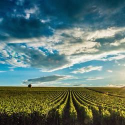 Zonsondergang op de wijngaard